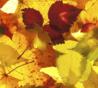 Lessen en trainingen tijdens de herfstvakantie